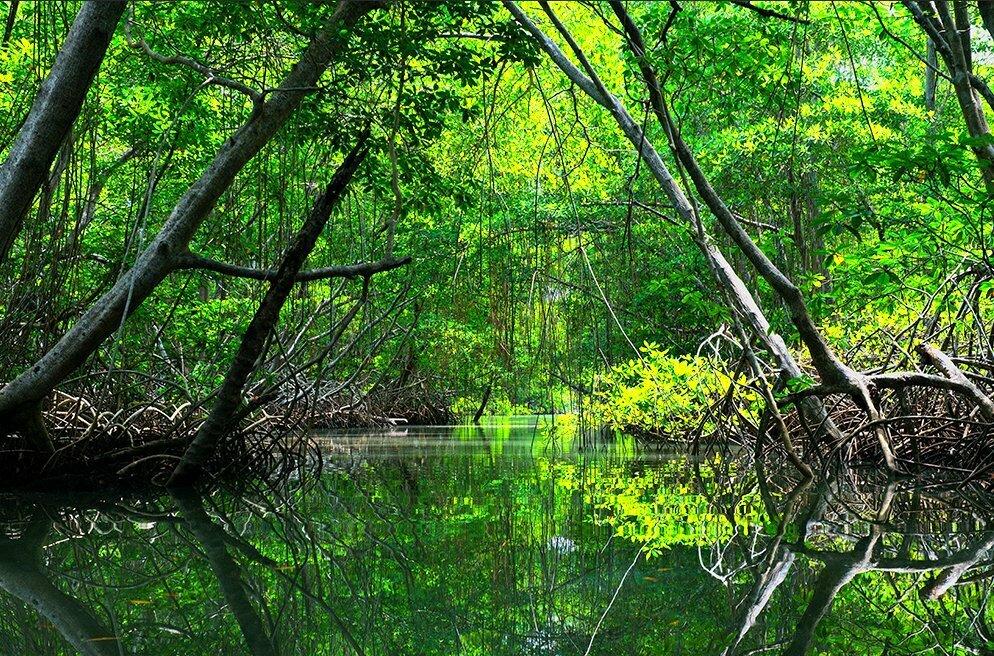 Governos querem gestão privada para parques, imagem de manguezal em UC do Pará
