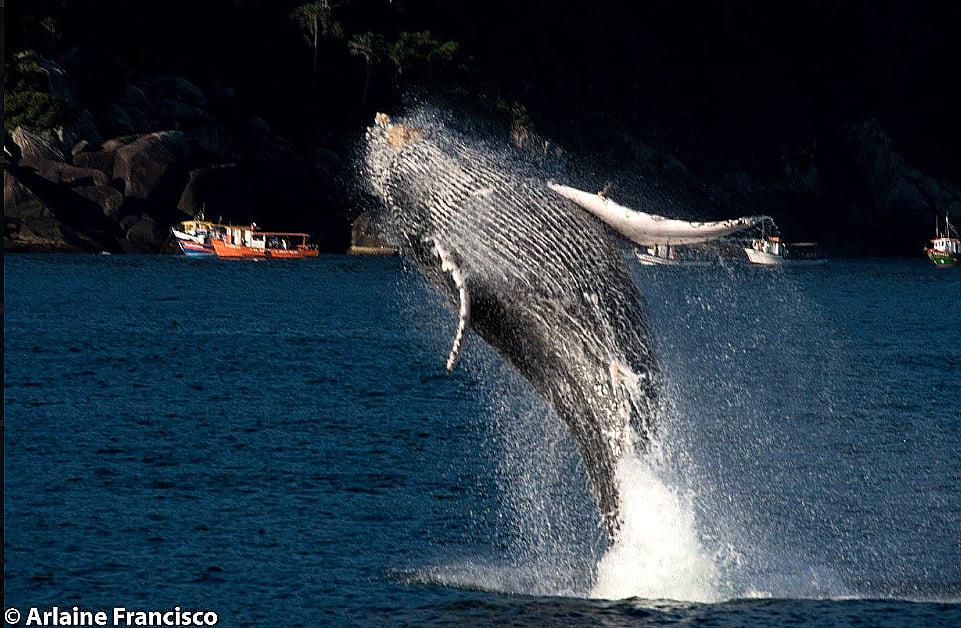 Baleias no litoral norte de São Paulo, foto de Baleia no litoral norte de São Paulo