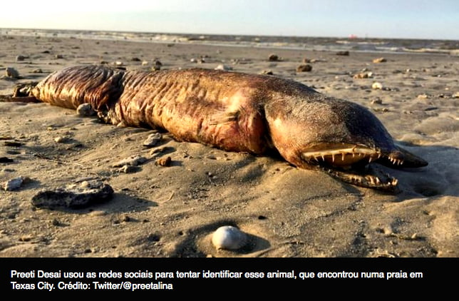 imagem de enguia gigante, uma das criaturas marinhas estranhas reveladas pelo furacão do Texas