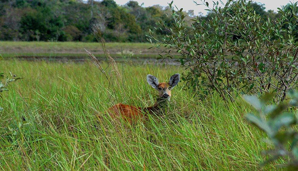 imagem de campo no pantanal numa Unidades de Conservação em terra e no mar,