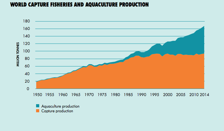 gráfico do volume de pesca no mundo, da FAO