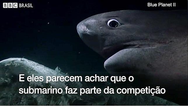 imagem de Tubarões, predadores do topo da cadeia