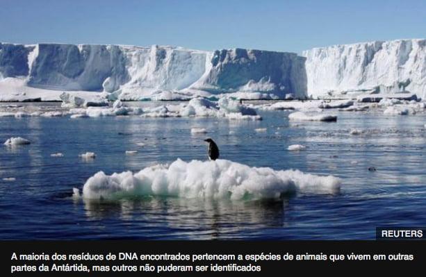 imagem de iceberg no post Plantas e animais na Antártica