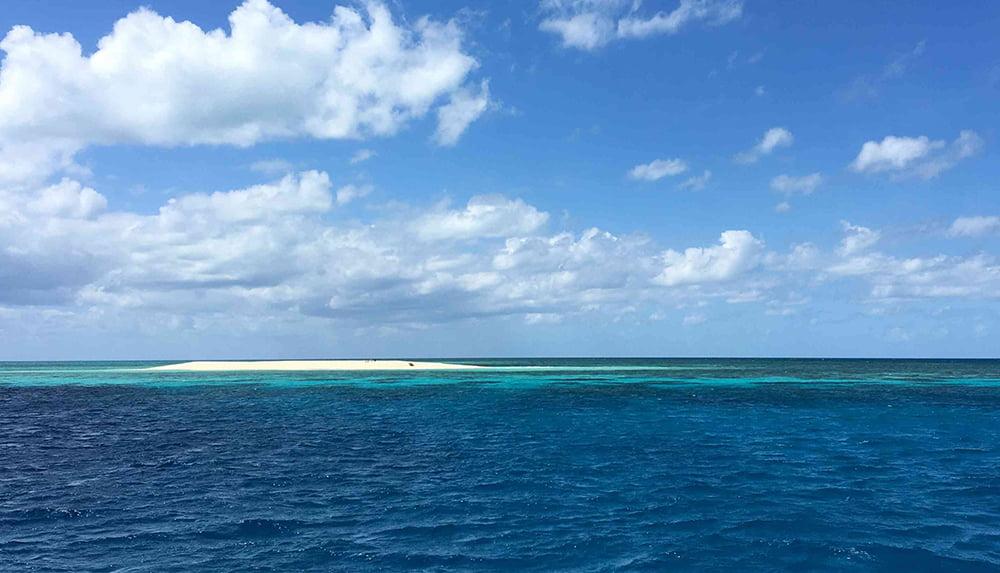Imagem do coral reef