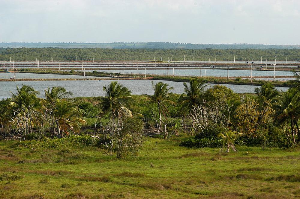 imagem de tanques de criação de camarões no Litoral do Rio Grande do Norte