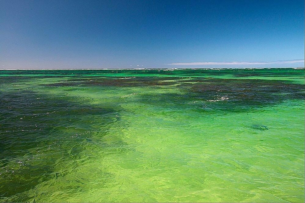 imagem de recifes estudados pelo CEPENE em Tamadaré, PE