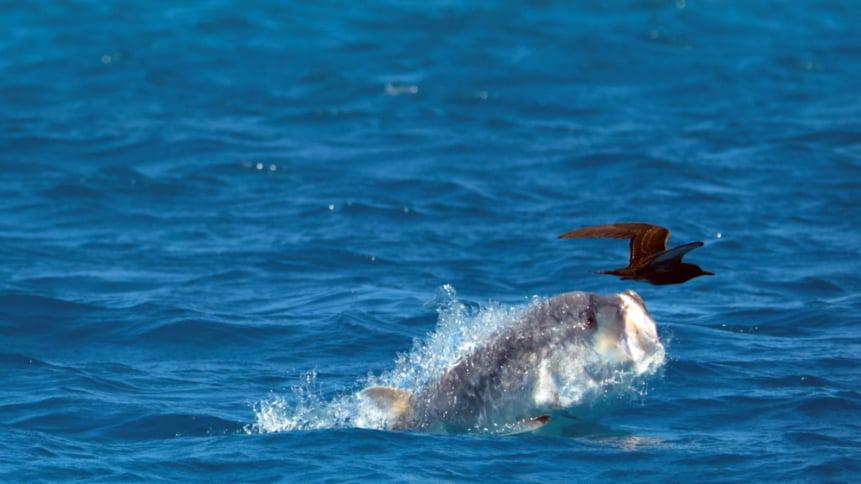 imagem de vida marinha do documentário Blue Planet II