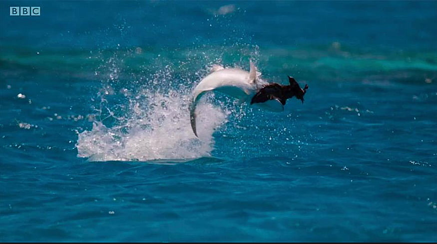 imagem de vida marinha