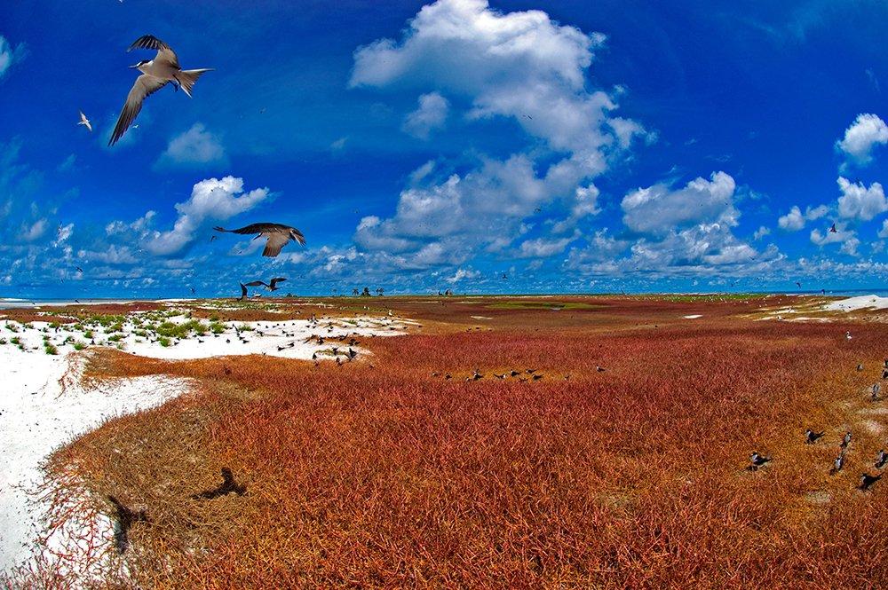 imagem de aves marinhas no atol das rocas