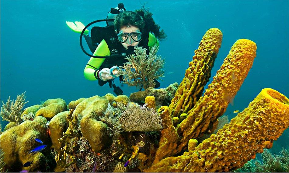 Imagem de mergulhador nos corais de Belize