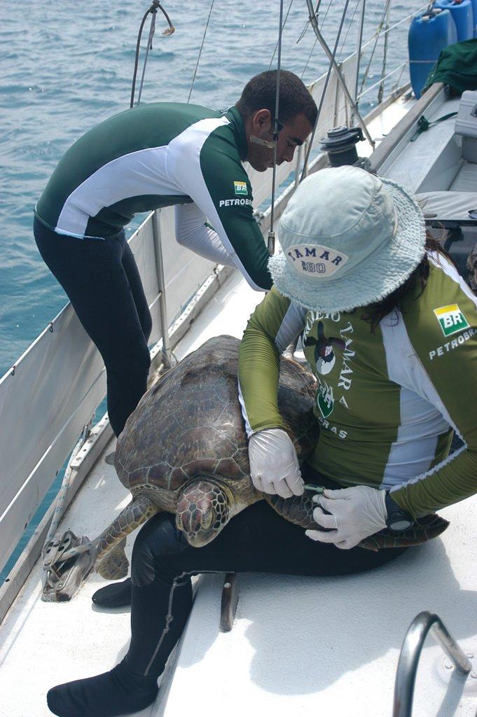 Imagem de tartaruga marinha no convés do mar sem fim