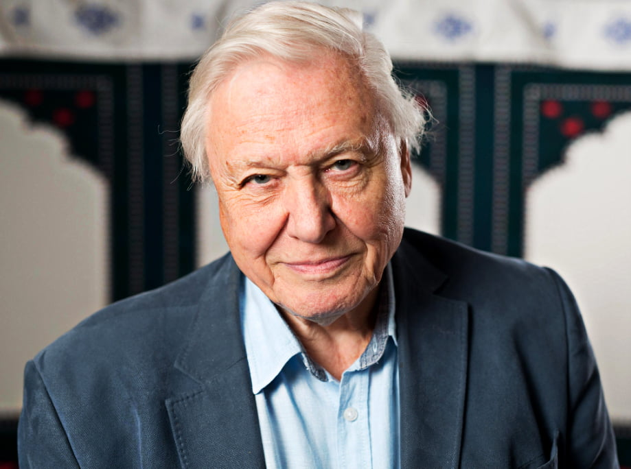 imagem de David Attenborough da BBC