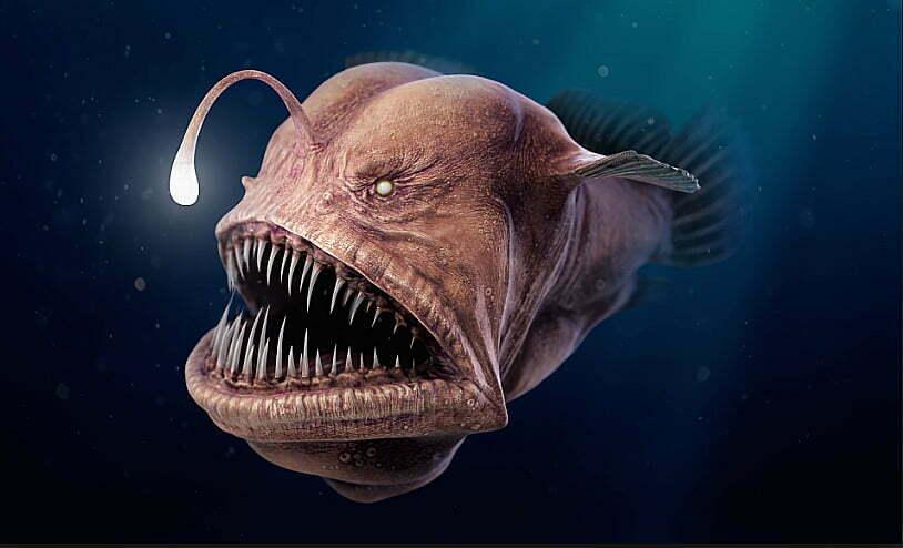 imagem do peixe- pescador habitante dos Oceanos, última grande área selvagem da Terra