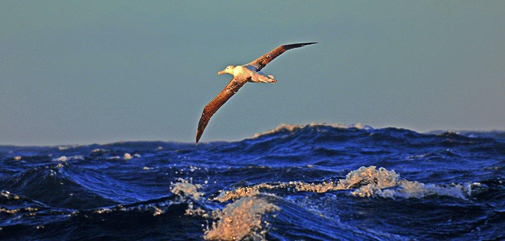 imagem de aves marinhas