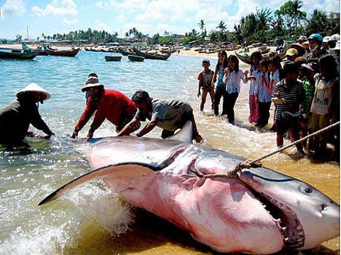 imagem de tubarões ou cações mortos