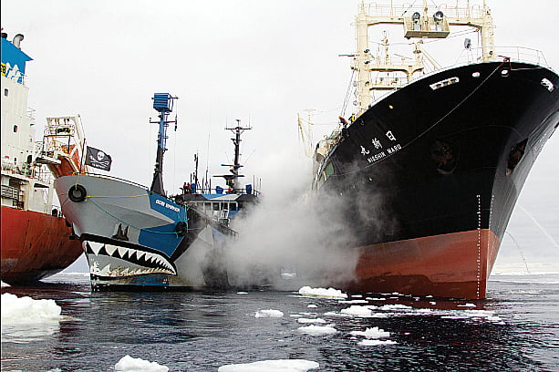 imagem de navio da Sea Shepherd