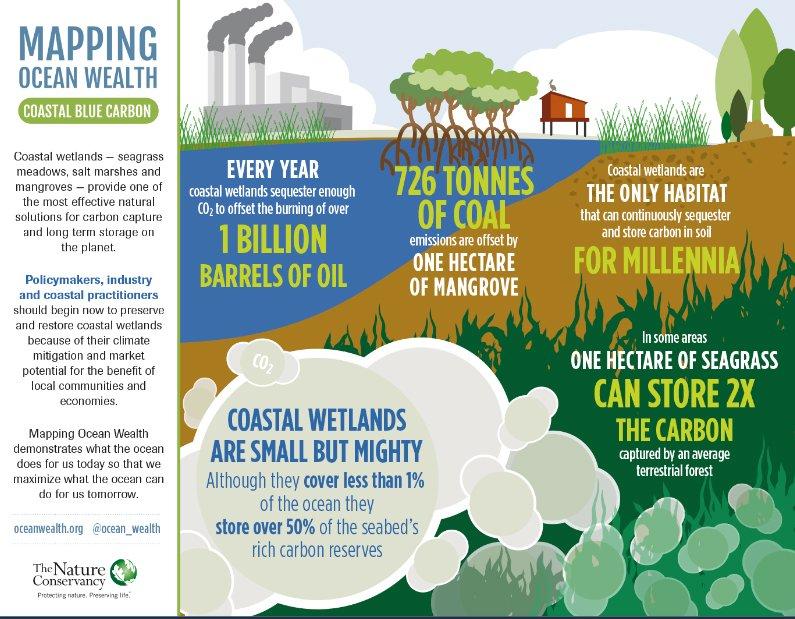 ilustração da estocagem de dióxido de carbono por ecossistema dos Oceanos, serviços e importância