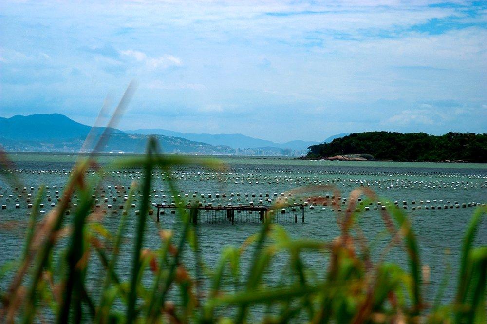 imagem de maricultura em Florianópolis