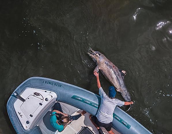 imagem de 200 golfinhos das guianas mortos