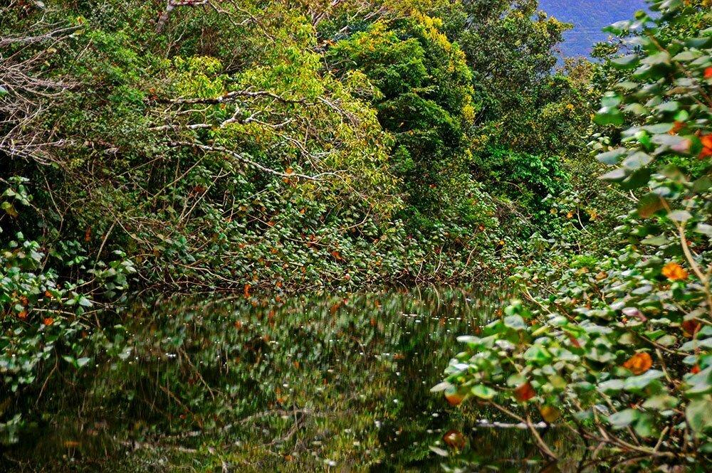 imagem de mangue do rio itapnhaú