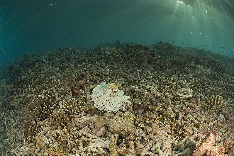 imagem dos oceanos perdem oxigênio