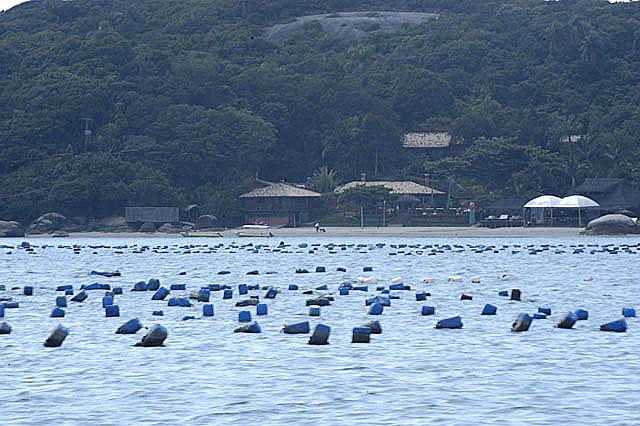 imagem de maricultura em Sta Catarina