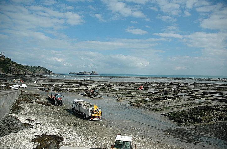 imagem de maricultura de ostras na França