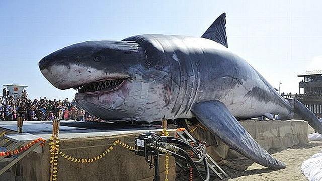 Tubarões Ou Cações E Sua Importância Venha Conhecê Los