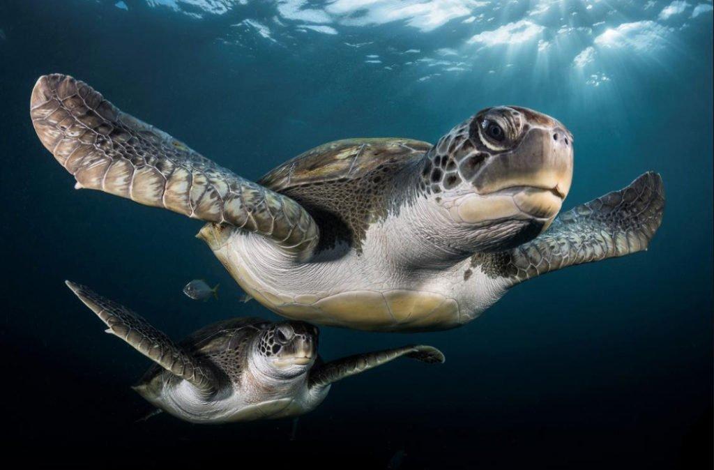 foto submarina de tartarugas