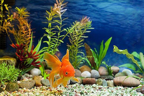 Imagem de aquário