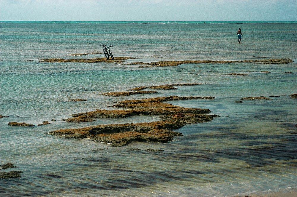 Imagem de pisoteio de corais