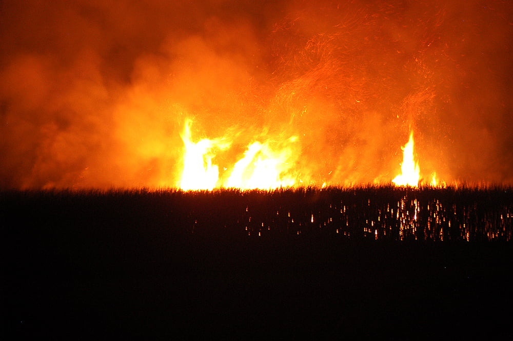 imagem de fogo no canavial do diário de bordo Litorais de Alagoas e Sergipe