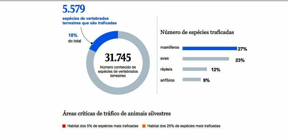 infográfico sobre tráfico de animais silvestres por espécie