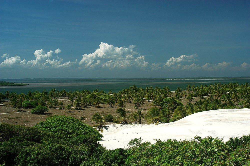 imagem de mangue seco, bahia