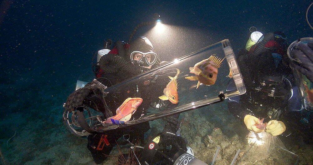imagem de Tecnologia ajuda oceanos com o Submersible Chamber for Ascending Specimens