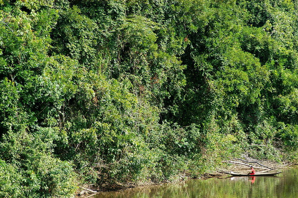 imagem de mata ciliar não litoral do Amapá