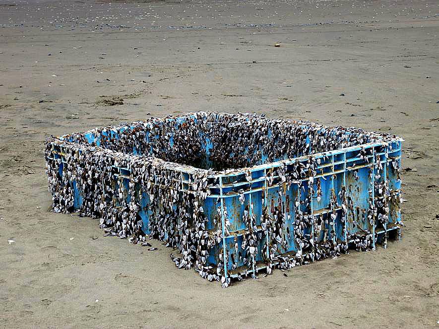 imagemde caixa de plástico com espécies invasoras