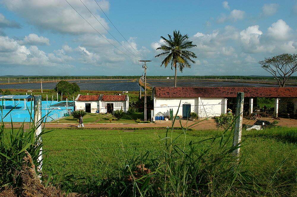 imagem da barra do rio Cunhaú, Rio Grande do Norte, detonada pela carcinicultura,