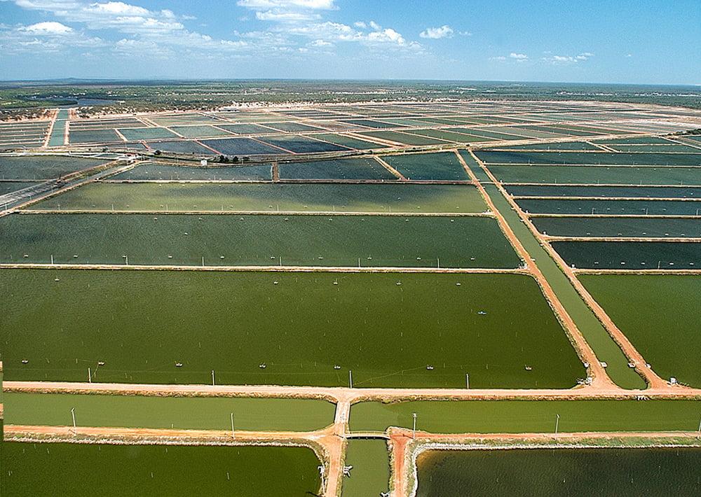 imagem de carcinicultura no Vale do rio Jaguaribe, município de Aracati, Ceará