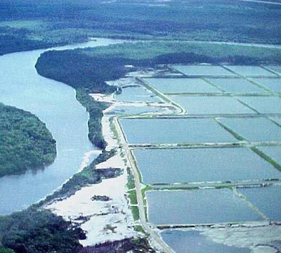 imagem de manguezal desmtada pela carcinicultura