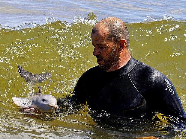 imagem de pesquisador com o Golfinho franciscana, do Prata, ou toninha