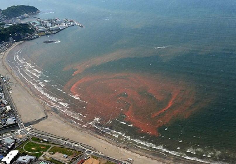 imagem de Maré vermelha em praia do Japão