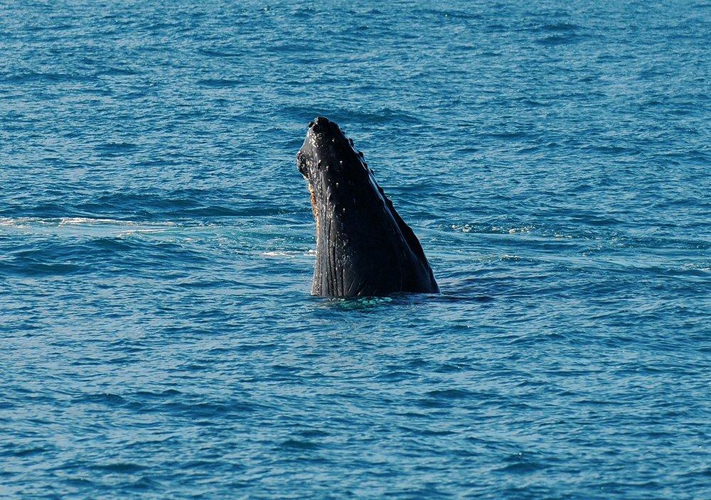 Image de baleia jubarte em abrolhos