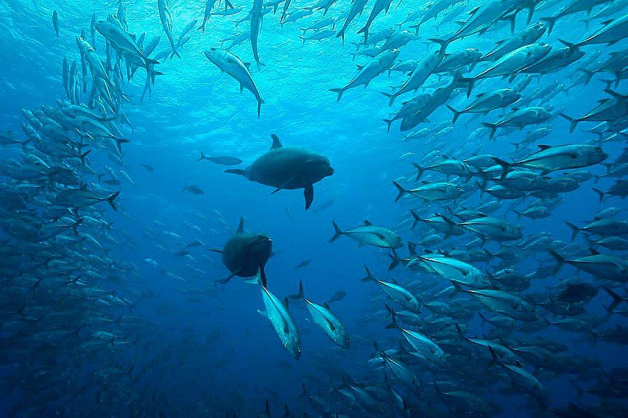 imagem submarina da ilha de cocos, costa rica