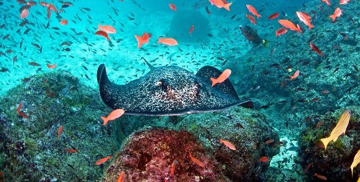 imagem submarina da ilha dos cocos, costa rica