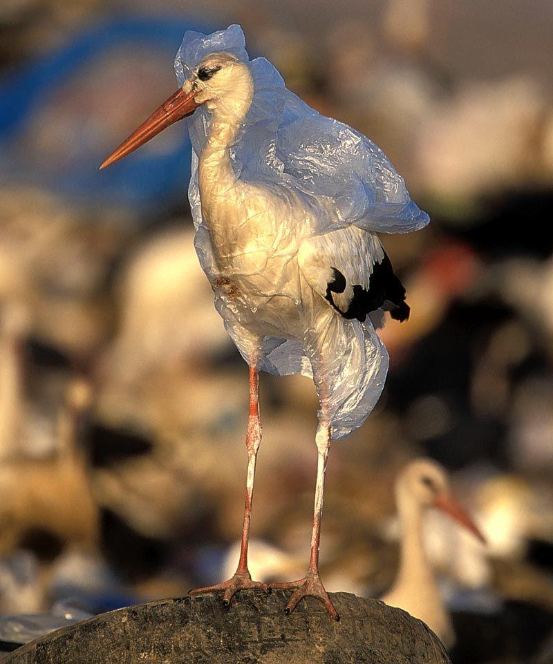 imagem de ave envolvida pelo plástico