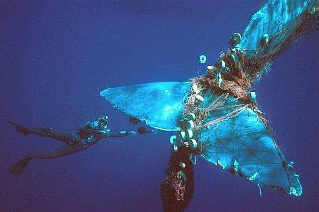 imagem de baleia emaranhada em rede de pesca