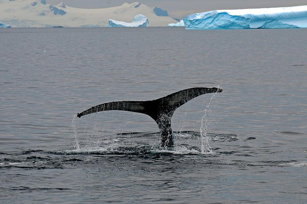 imagem de cauda de baleia
