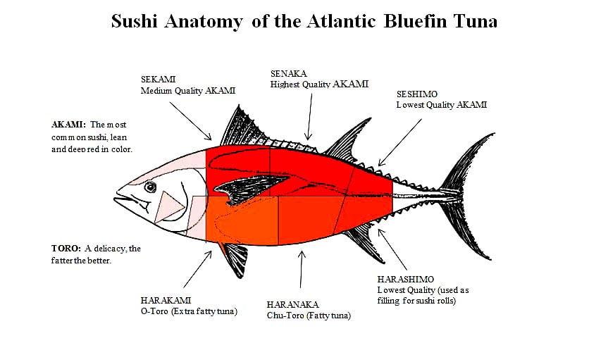 ilustração de Atuns Rabilho e suas partes para comer