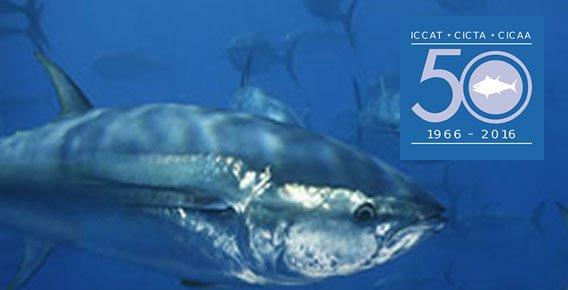 logotipo da ICCAT que regula a pesca de atuns rabilho no mundo